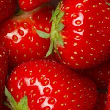 Die Erdbeerzeit